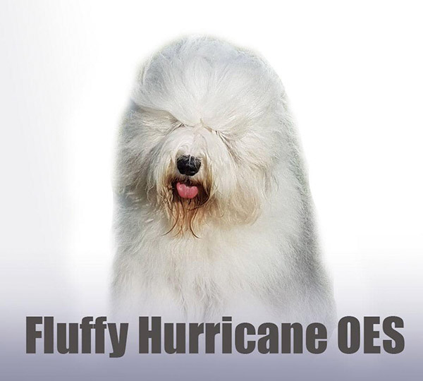 Fluffy Hurricane