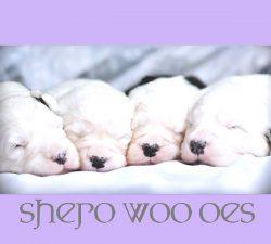 Shero Woo